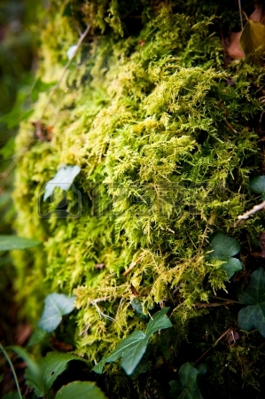 moss-covered-rock-wild-ivy-and-a-spider-web